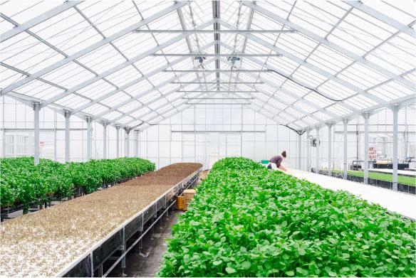 農作物の湿度管理