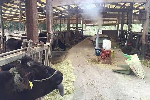 家畜の感染症を予防し、畜産経営を支える
